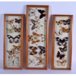 THREE VINTAGE BUTTERFLY SPECIMENS CASES. 46 cm x 15 cm. (3)