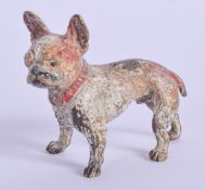 A COLD PAINTED BRONZE DOG. 4 cm x 4 cm.