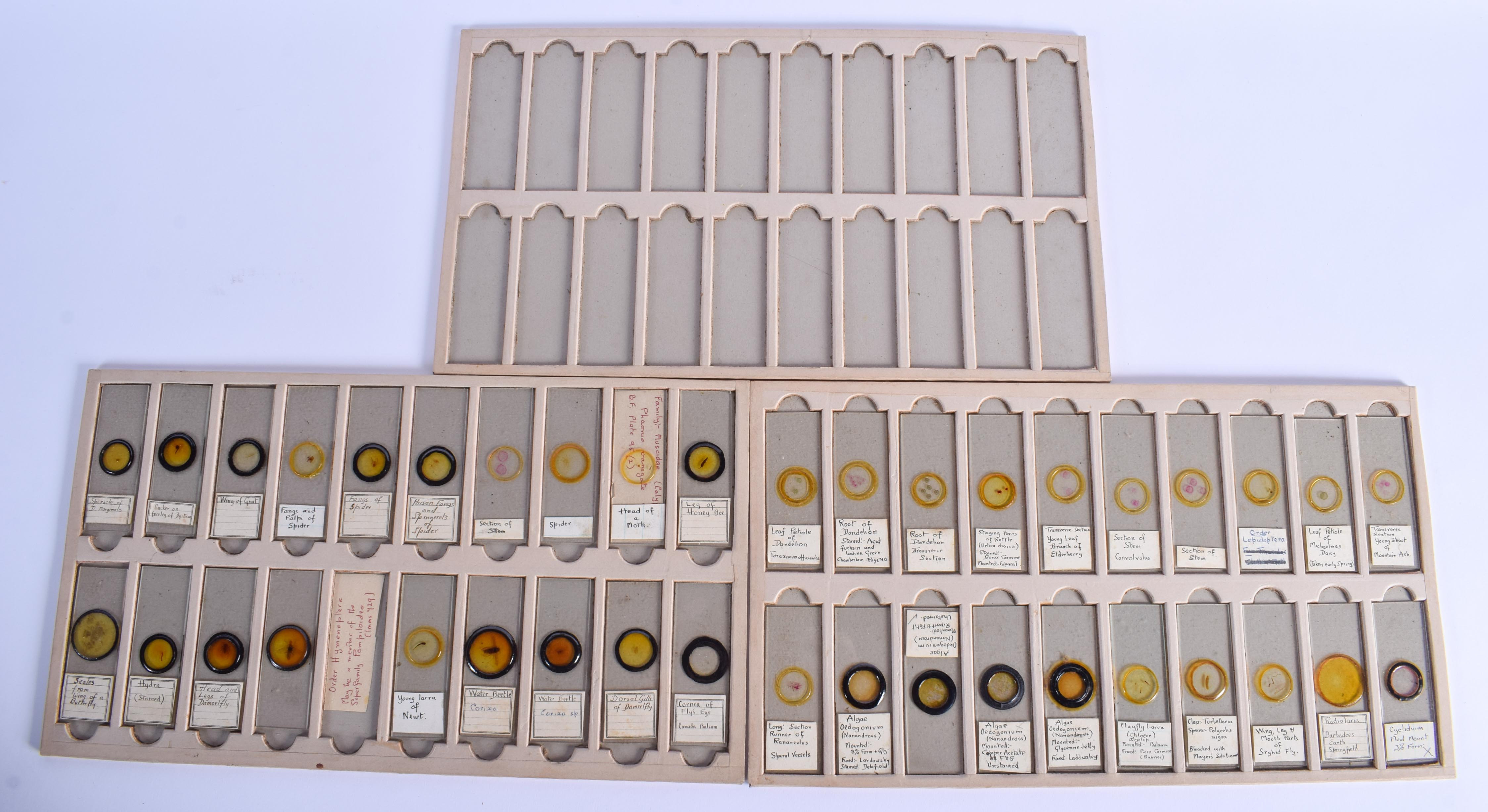ASSORTED VINTAGE MICROSCOPE SLIDES including Flies, Mites, Crabs etc. (qty) - Image 5 of 5