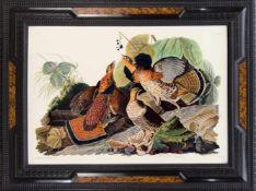 "John J.Audubon, ""Ruffed Grous"", Faksimile nach der Radierung aus ""The birds of amerika"","