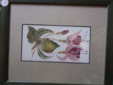 "Beenham, Joy - A delightful painting on glass ""Fuchsia"", Signed, framed 10"" x 12"""