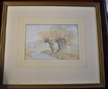 Oliver, Lindsey - Signed Watercolour 'Pollarded Willows'