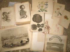 [PRINTS] coll'n of engr. plates, incl. NATURAL HISTORY, MEDICAL, PORTRAIT etc.