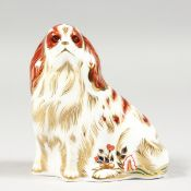 A ROYAL CROWN DERBY PAPERWEIGHT CAVALIER KING CHARLES SPANIEL, gold stopper and box.