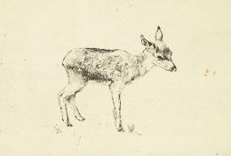 """Circle of Detmold, An etching of a fawn, 3"""" x 4.25""""."""