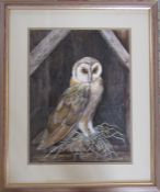 Framed watercolour and gouache painting of a barn owl by K Almond 54 cm x 66 cm (size including