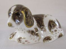 Royal Crown Derby paperweight - 'Scruff' exclusively for the Royal Crown Derby Collectors Guild,