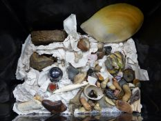 AN INTERESTING VARIED COLLECTION OF FOSSILS, GEOLOGICAL SPECIMENS ETC.