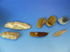 A COLLECTION OF EARLY KNAPPED FLINT TOOLS, SPEAR AND ARROW HEADS TOGTHER WITH TWO TRILOBITE FOSSILS