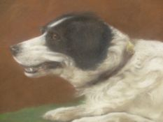 PORTRAIT OF A BORDER COLLIE, SIGNED AND DATED INDISTINCTLY, PASTEL. 33 x 38cms.