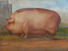 ENGLISH NAIVE SCHOOL. THE PRIZE PIG, INITIALLED OIL ON BOARD. 39 x 46cms.
