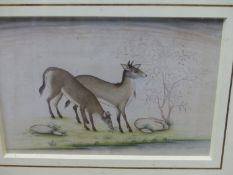 AN INDIAN COMPANY SCHOOL WATERCOLOUR PAINTED WITH TWO DEER BY A TREE. 16.5 x 23.5cms.