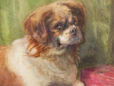 19/20th.C.ENGLISH SCHOOL. PORTRAIT OF A DOG, WATERCOLOUR. 37 x 56cms.