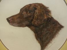 MARY BROWNING (20th/21st.C.). ARR. OVAL PORTRAIT OF A SPANIEL. PASTEL, SIGNED. H. 46cm x 40cm.