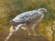 20th.C. SCHOOL. A BIRD OF PREY. OIL ON BOARD. SIGNED INDISTINCTLY AND DATED 1988. 29.5 x 40cms.