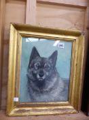 A GILT FRAMED PORTRAIT OF A DOG BY MISS SECKHAM.