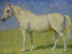 MAIMIE LOYD (20th.C. ENGLISH SCHOOL). PORTRAIT OF A PONY, MERRYLEGS. INSCRIBED VERSO, OIL ON CANVAS.