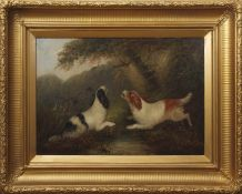 George Armfield (1808-1893) Spaniels chasing pheasant oil on canvas, signed lower right, 50 x 75cm