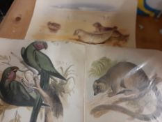 """Birds & Animals, incl """"Jackdaw"""" Book, signed Prints & Engravings"""