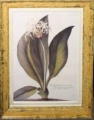 Group of five large reproduction framed coloured prints including two pairs, the largest 75cm x