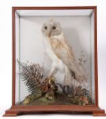 Taxidermy Cased Barn Owl in naturalistic setting, 44 x 35cm, (pre-1947)