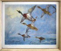 "Archibald Thorburn (1860-1935), ""Mallard in Squally Weather"", coloured print, published by W F"