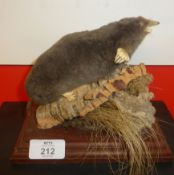 Taxidermy uncased Mole on naturalistic base