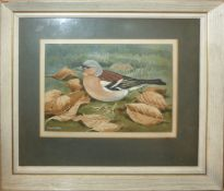 AR Dr Noel W Cusa (1909-1990), Chaffinch, watercolour, signed lower left, 11 x 15cm