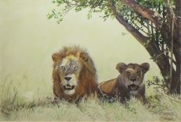 Clifford Charles Turner (1920-2018), Lions, watercolour, signed lower right, 36 x 53cm
