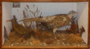 Taxidermy cased Pheasant and Water Rail in naturalistic setting by T Knight of Norwich, 41 x 69cm