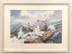 "Carl Donner (born 1957) ""Ptarmigan on the High Tops"", watercolour, signed lower right, 37 x 56cm"