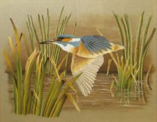 Terence James Bond (born 1946), Kingfisher, watercolour, signed lower right, 25 x 32cm