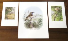 """After Richard A Richardson, """"Blue Throat painted at Blakeney Point Nature Reserve"""", """"Firecrest"""""""
