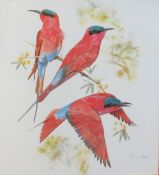 After Chris van Rooyen, Exotic birds, pair of coloured prints, 50 x 45cm
