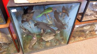 Taxidermy cased group of foreign birds in naturalistic setting, 72 x 72cm