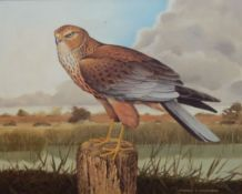 "Patrick A Oxenham (20th century), ""The Marsh Harrier"", oil on canvas, signed lower right, 35 x 40cm"