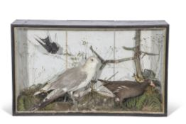 Taxidermy cased dull Moorhen and two other birds, in naturalistic setting, 48 x 81cm (a/f)