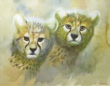 Clifford Charles Turner (1920-2018), Cheetah cubs, watercolour, signed lower right, 26 x 33cm