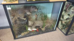 Taxidermy cased pair of Otter cubs in naturalistic setting, 61 x 84cm
