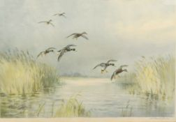 Roland Green (1896-1972), Mallard alighting, artist's coloured proof with publisher's blind stamp,