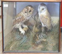 Taxidermy cased Tawny Owl and Barn Owl in naturalistic setting, 49 x 55cm