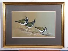 Terence James Bond (born 1946), Lapwings, watercolour, signed and dated 1975 lower right, 38 x 64cm