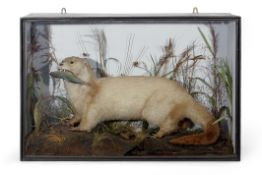 Taxidermy cased Otter in naturalistic setting by Roberts & Son, 55 x 83cm