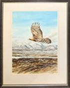 Keith Brockie, Eagle in flight over mountain landscape, watercolour, signed and dated 95 lower
