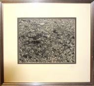 """Eric Hosking OBE, """"Little Ringed Plover"""", photograph published 1951, signed in pencil to mount, 29 x"""