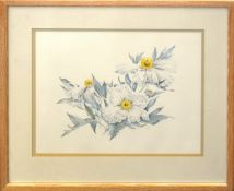 "Anne Abraham, ""Romneya Coulteri"", watercolour, monogrammed lower right, 30 x 40cm"