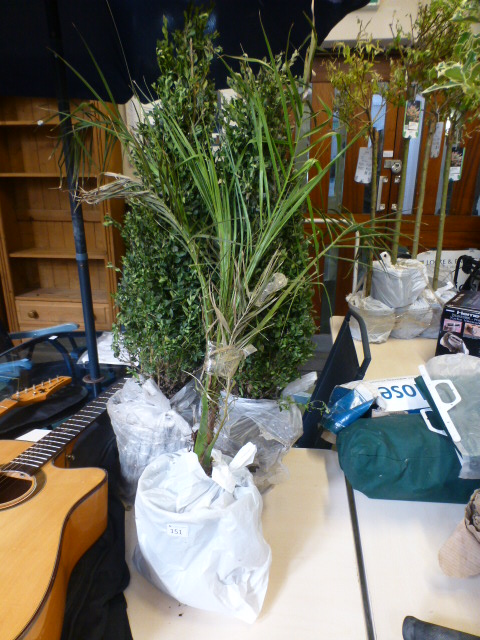 Lot 151 - Two bushy trees together with a grass pl