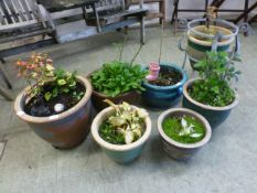 A selection of glazed garden plant pots,