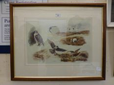 A framed and glazed print of birds of prey etc.