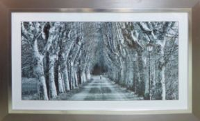 A TREE-LINED BOULEVARD, black and white photoprint, 76cm x 125cm overall, framed and glazed.
